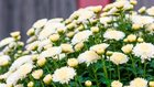「どのような葬儀にしようか」──幸福の科学の葬儀 【どうして供養が大切なのか(1)】