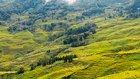 中国・湖北省、雲南省でもバッタが大量発生 食料危機の恐れが迫る
