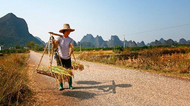 中国でイナゴ被害が確認 食糧危機への懸念が浮上
