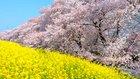 天国に還れる生き方を──幸福の科学の葬儀【どうして供養が大切なのか(3)】