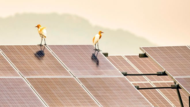 太陽光パネルもウイグルの強制労働によって作られていた!? 米コンサルタントが報告