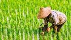 ケインジアンのウソ 毛沢東時代の農民たちが交わした密約が物語るものとは?