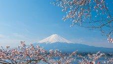 大和の心を伝える桜の花──木花開耶姫の霊言で判明した古代日本の真実