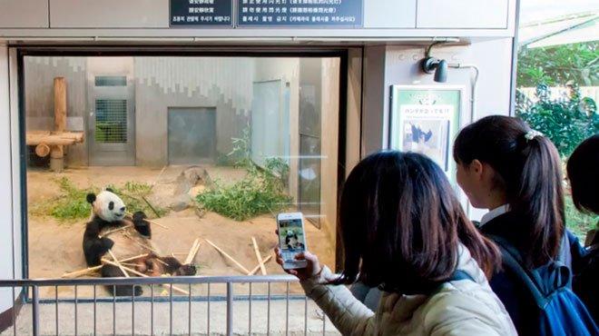 上野動物園に双子パンダが誕生し香香(シャンシャン)がお姉さんに いずれは中国に返還か
