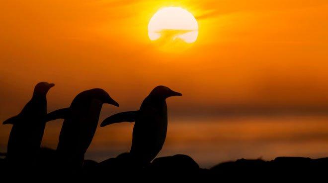 ペンギンは宇宙から来た? という研究結果が発表される UFOや宇宙人は一つの科学のあり方と考えるべき
